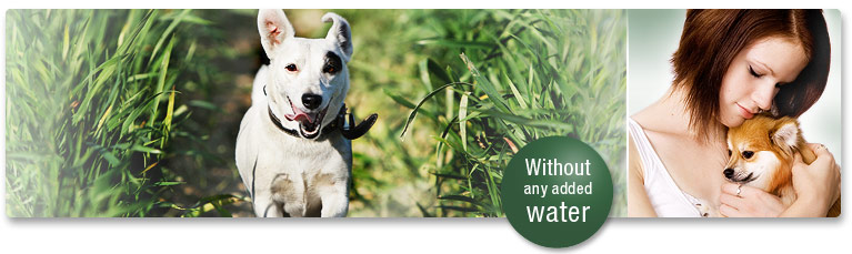 The PLATINUM difference to conventional wet dog food
