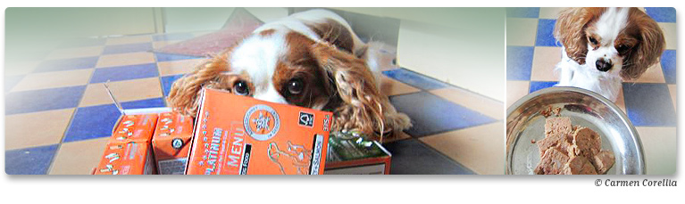 PLATINUM Nassfutter-Test bei Stadthunde.com