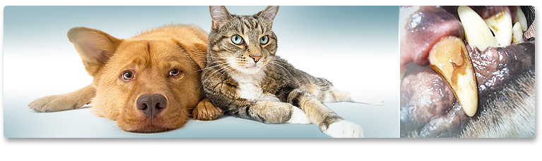 Tartar in dogs & cats
