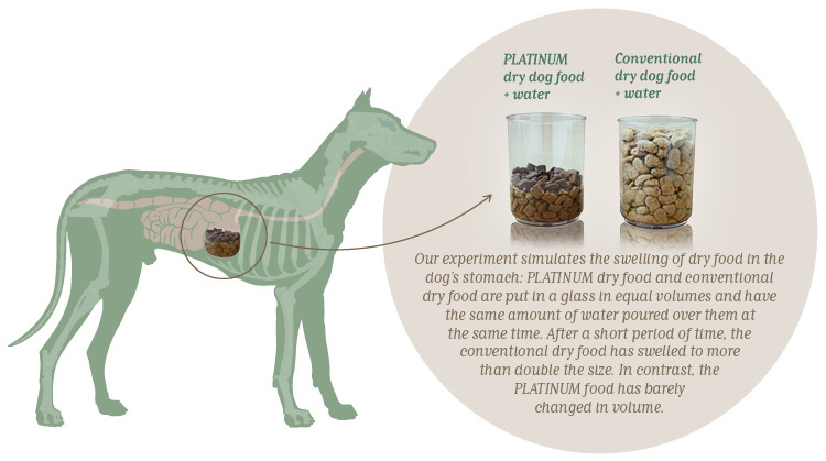 PLATINUM dry dog food does not swell in the stomach!